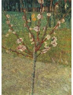 Kwitnące drzewo migdałowe