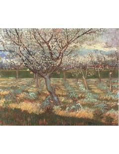 Kwitnące drzewa morelowe