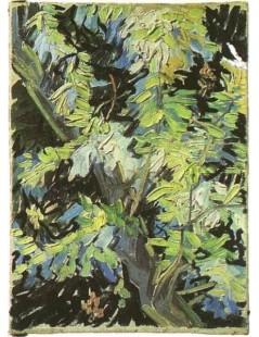 Kwitnące gałęzie akacji