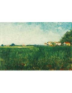 Gospodarstwa wśród zbóż, okolice Arles