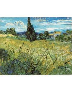 Zielone pole pszenicy z Cyprysem