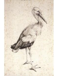 Tytuł: The Stork, Autor: Albrecht Durer