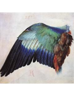 Tytuł: Wing of a Roller, Autor: Albrecht Durer